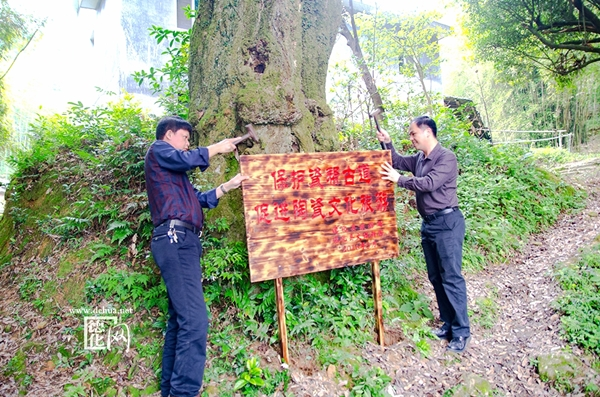 2017年文化旅游局长现场竖立瓷帮古道保护牌_副本.jpg